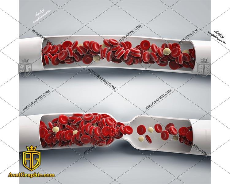 شاتراستوک گلبول ها در رگ رایگان