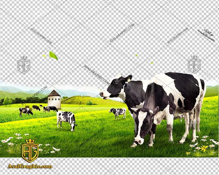 png گاو مزرعه پی ان جی گاو , دوربری گـاو , عکـس گـاو با زمینـه شـفاف, گـاو با کیـفیـت و خـاص با فرمـت png