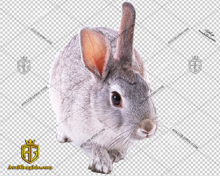 png خرگوش خانگی , پی ان جی خرگوش , دوربری خرگوش , عکس خرگوش با زمینه شفاف, خرگوش با فرمت png