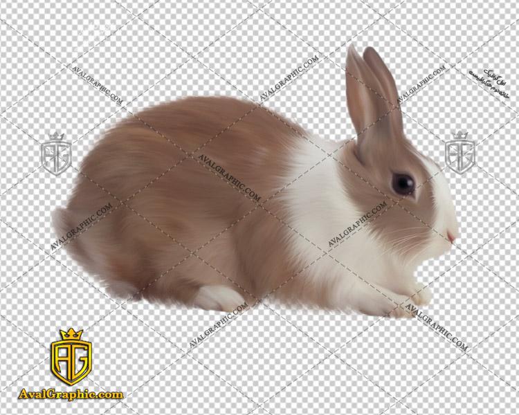 png خرگوش سفید قهوه ای , پی ان جی خرگوش , دوربری خرگوش , عکس خرگوش با زمینه شفاف, خرگوش با فرمت png