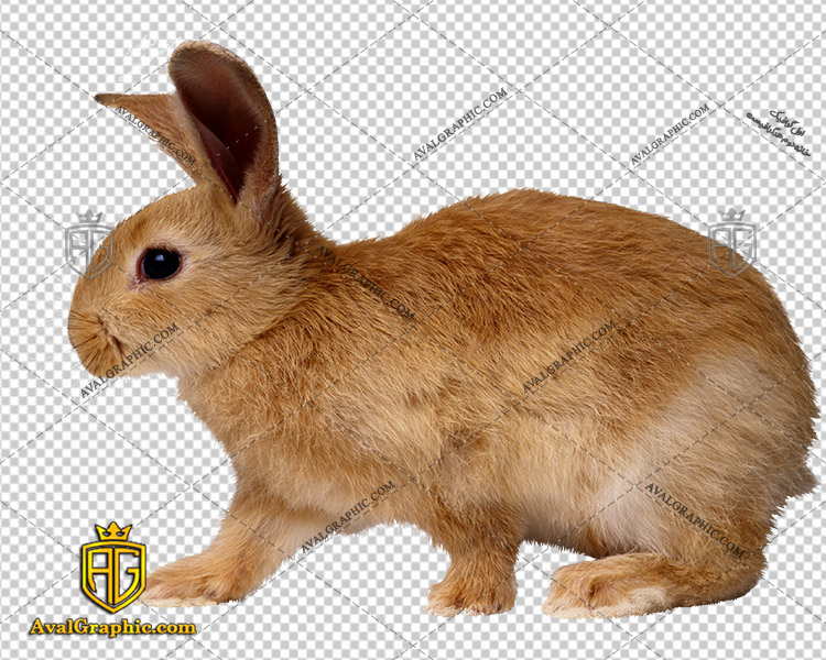 png خرگوش اهلی , پی ان جی خرگوش , دوربری خرگوش , عکس خرگوش با زمینه شفاف, خرگوش با فرمت png