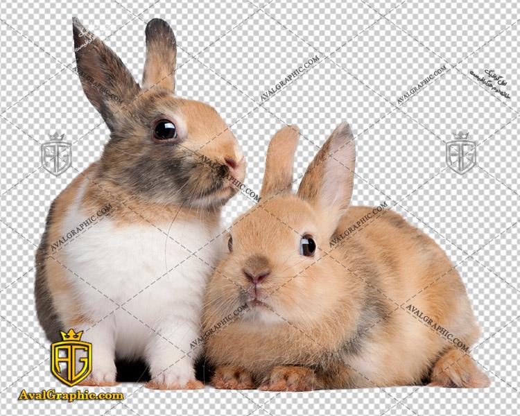 png خرگوش های ناز , پی ان جی خرگوش , دوربری خرگوش , عکس خرگوش با زمینه شفاف, خرگوش با فرمت png
