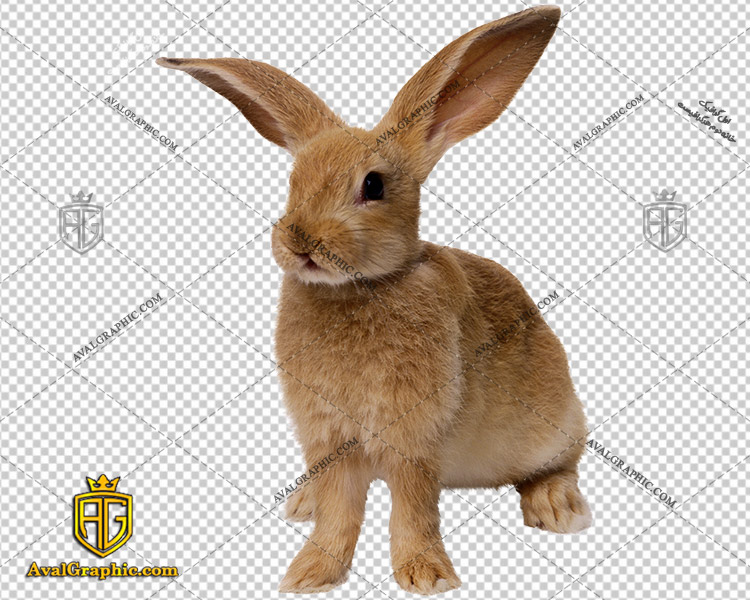 png خرگوش باهوش , پی ان جی خرگوش , دوربری خرگوش , عکس خرگوش با زمینه شفاف, خرگوش با فرمت png