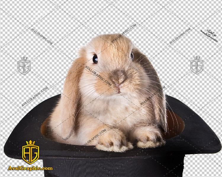 png خرگوش در کلاه , پی ان جی خرگوش , دوربری خرگوش , عکس خرگوش با زمینه شفاف, خرگوش با فرمت png