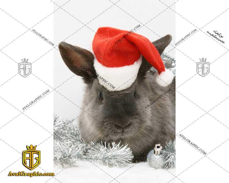 شاتر استوک خرگوش کریسمس
