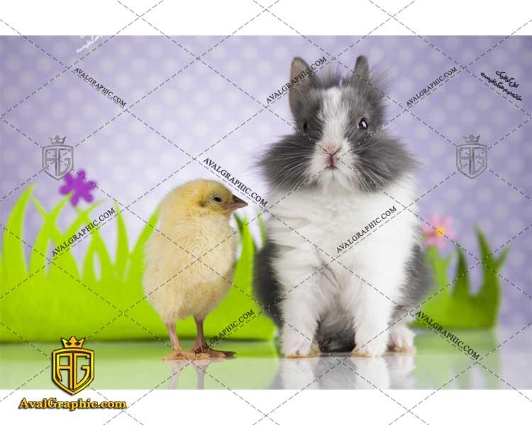 شاتر استوک خرگوش باهوش