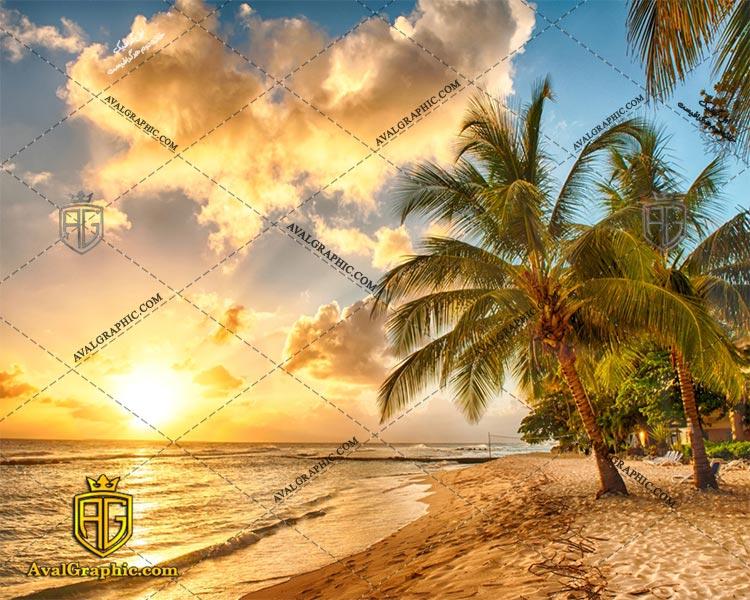 عکس با کیفیت نخل ساحلی مناسب برای طراحی و چاپ می باشد - عکس نخل - تصویر نخل - شاتر استوک نخل - شاتراستوک نخل