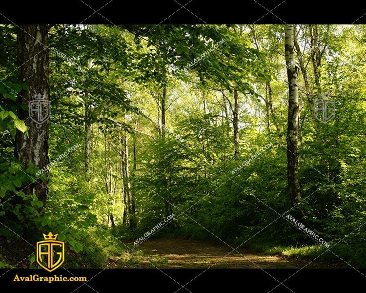 عکس جنگل مرتفع رایگان مناسب برای چاپ و طراحی با رزو 300 - شاتر استوک جنگل - عکس با کیفیت جنگل - تصویر جنگل- شاتراستوک جنگل