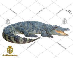 عکس با کیفیت حیوان کروکدیل مناسب برای طراحی و چاپ - عکس کروکدیل - تصویر کروکدیل - شاتر استوک کروکدیل - شاتراستوک کروکدیل
