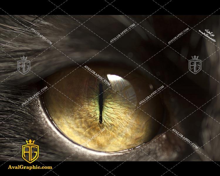عکس چشم زرد رایگان مناسب برای چاپ و طراحی با رزو 300 - شاتر استوک چشم - عکس با کیفیت چشم - تصویر چشم - شاتراستوک چشم