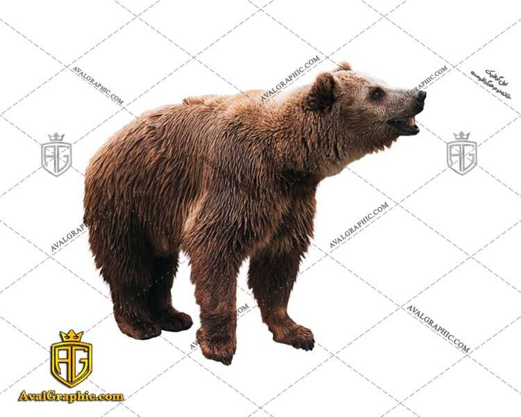عکس با کیفیت خرس پشمالو قهوه ای مناسب برای طراحی و چاپ - عکس خرس - تصویر خرس - شاتر استوک خرس - شاتراستوک خرس