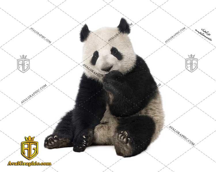 عکس با کیفیت خرس پاندا مناسب برای طراحی و چاپ خرس پاندا است- عکس خرس - تصویر خرس - شاتر استوک خرس - شاتراستوک خرس دانلود از