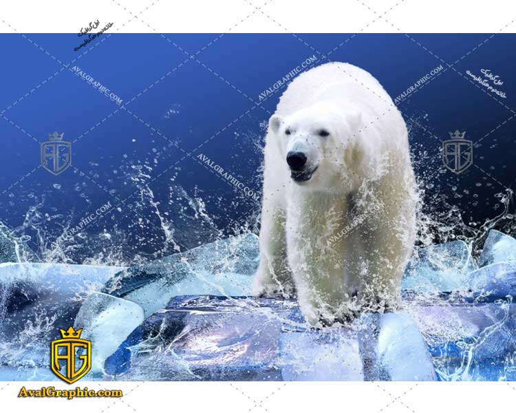 عکس با کیفیت یخ شناور مناسب برای طراحی و چاپ - عکس خرس قطبی- تصویر خرس قطبی- شاتر استوک خرس قطبی- شاتراستوک خرس قطبی