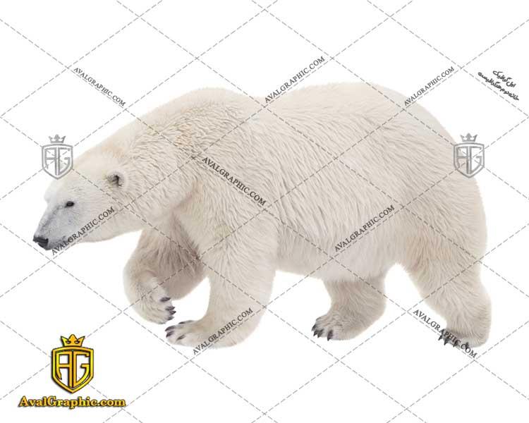 عکس با کیفیت خرس های قطب شمال مناسب برای طراحی و چاپ - عکس خرس قطبی- تصویر خرس قطبی- شاتر استوک خرس قطبی- شاتراستوک خرس قطبی