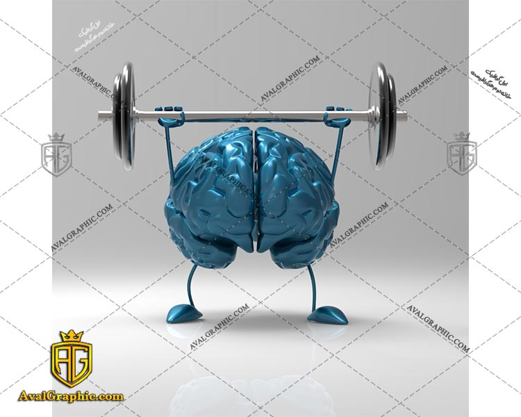 عکس با کیفیت مغز وزنه بردار مناسب برای طراحی و چاپ - عکس مغز - تصویر مغز - شاتر استوک مغز - شاتراستوک مغز