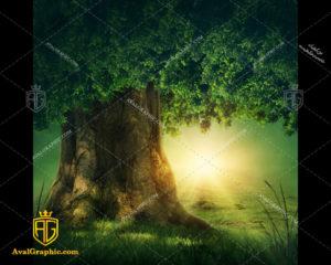 عکس با کیفیت درخت تنومند مناسب برای طراحی و چاپ - عکس درخت - تصویر درخت - شاتر استوک درخت - شاتراستوک درخت